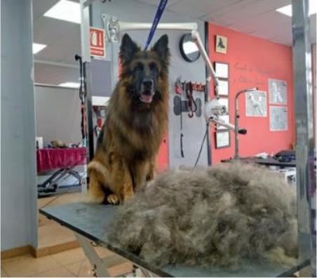 La peluquería canina en verano