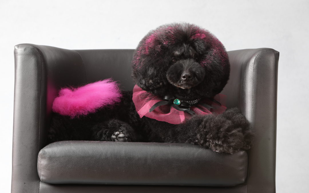 ¿Cómo reducir el estrés en la peluquería canina?