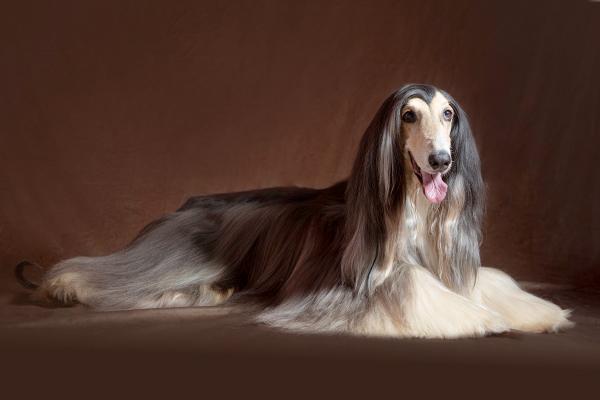 Los cuidados de los perros de pelo largo