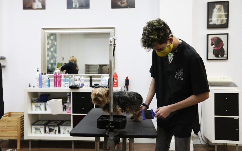 Curso Auxiliar Técnico Peluquería Canina