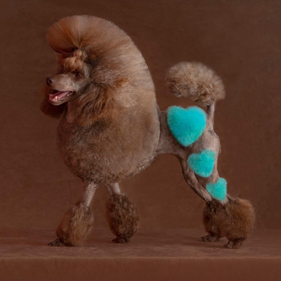 Peluquería canina creativa y de fantasía