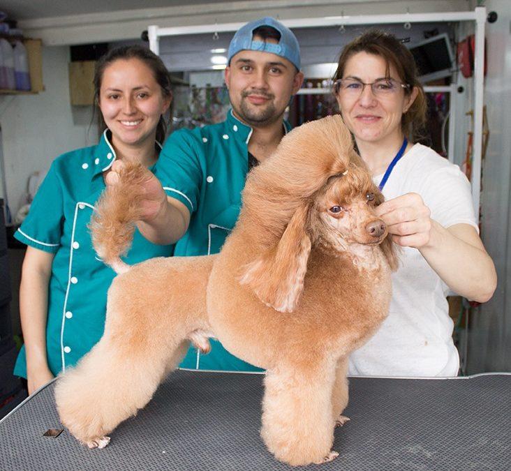 Seminarios de Peluquería Canina en Colombia y Costa Rica