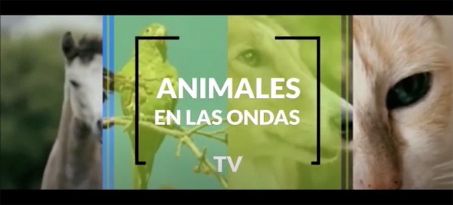 Entrevista sobre peluquería canina en el canal de TV «Animales en las Ondas»