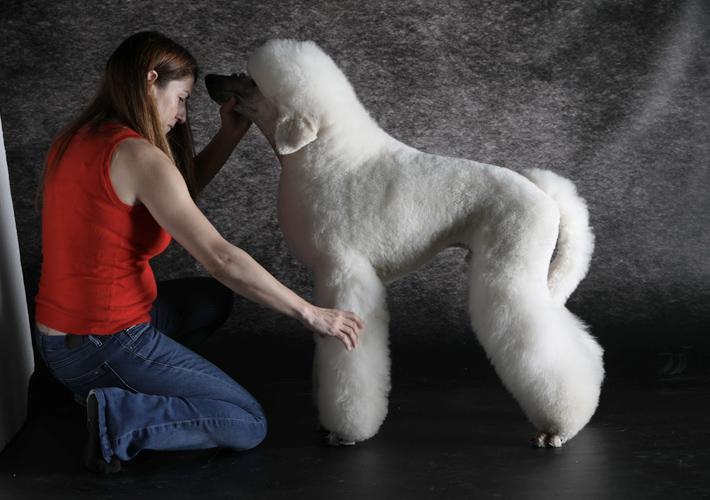 Curso profesional de peluquería canina comercial, exposición y creativa