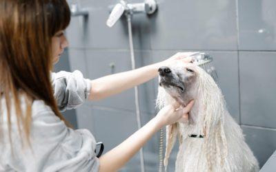 La ozonoterapia, un tratamiento natural muy beneficios para perros y gatos
