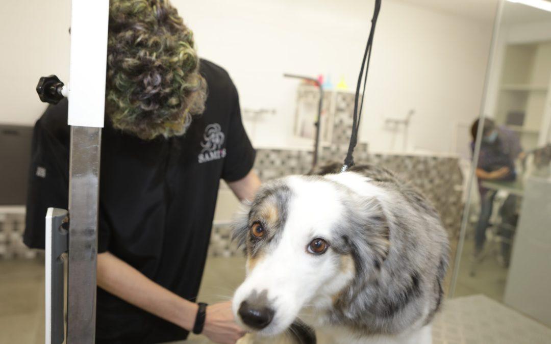 La correcta forma de interactuar con los perros en la peluquería